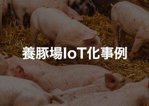 養豚場IoT化事例